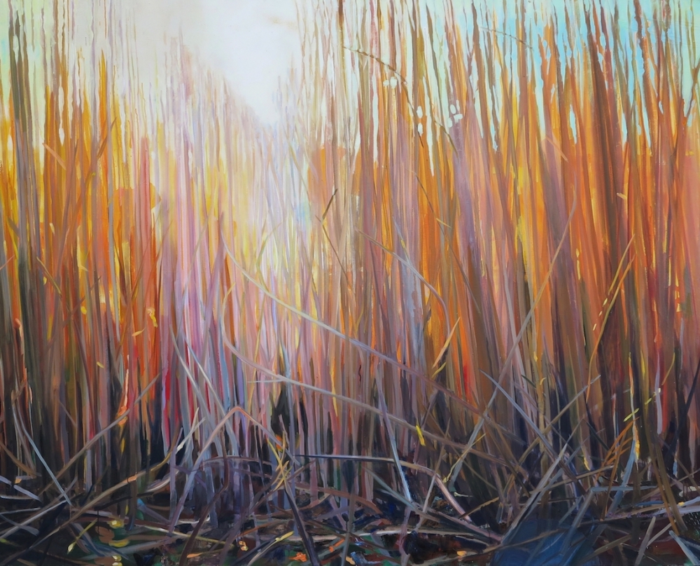 Reeds in Glow in January